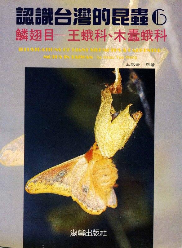 認識台灣的昆蟲(6):鱗翅目—王蛾科、木蠹蛾科